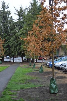 Pacific replants memorial walk