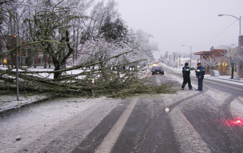 Snow topples tree on Pacific avenue